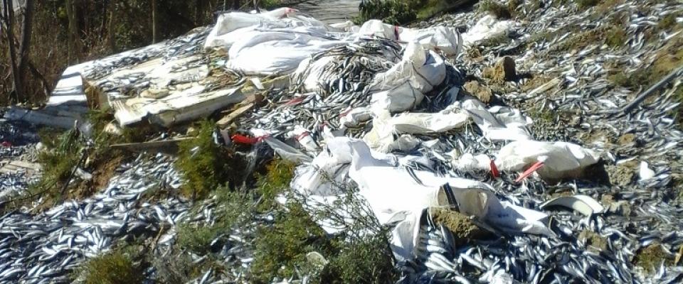 El Ayuntamiento denuncia a la Junta de Andalucía y al propietario del camión por los miles de kilos de pescado vertidos en la carretera de la Casería