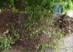 Algunos vecinos o vecinas siguen depositando fuera de su ubicación los restos de jardinería