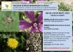 Taller de plantas medicinales 3ª edición