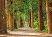 Ampliación época de alto riesgo incendios forestales 2021