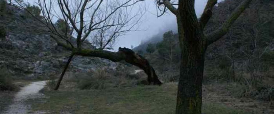 Día del árbol 2012