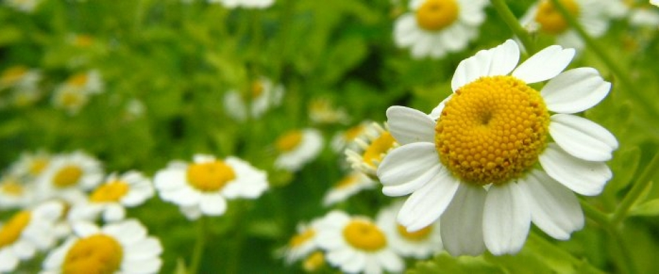 Conoce las plantas medicinales del Parque Natural