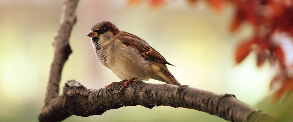 Seminario temático de aves en el Parque Natural de la Sierra de Huétor