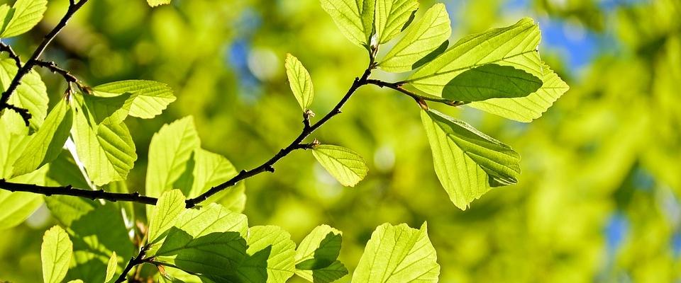 El Día del Árbol se celebrará el domingo 15 de abril