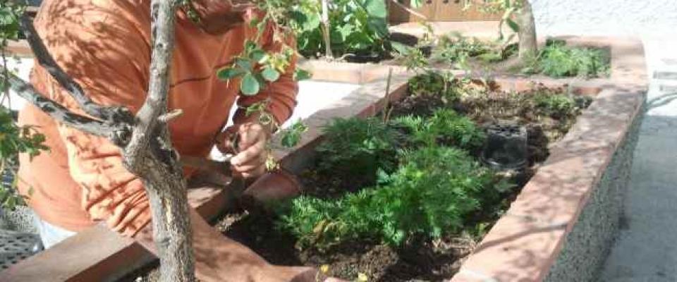 Plantado un centenar de árboles en calles de Huétor