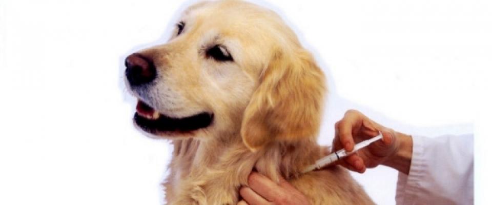 Vacunación para los perros en Huétor Santillán