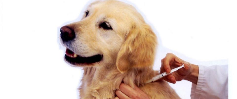 Vacunas para los perros