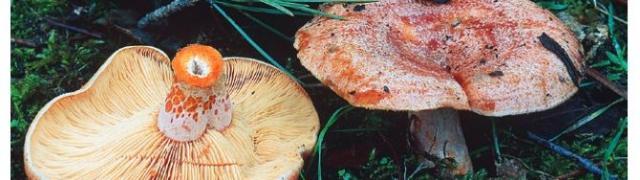 Guía para identificar las setas comestibles en la Sierra de Huétor