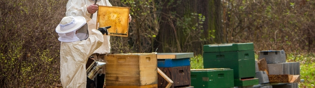 """Curso de apicultura en Huétor Santillán """"Manejo de la Colmena a la salida del invierno"""""""