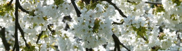 Celebración del Día del Árbol 2017 (23 de abril)