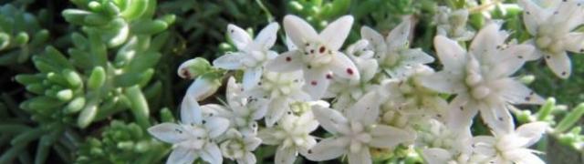 """El 30 de abril, presentación del libro """"Plantas medicinales de la Sierra de Huétor"""""""